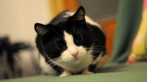 Monotone Cat